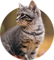 nav_icon_cats-kitten